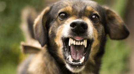 Why dogs bite during the rainy seasons