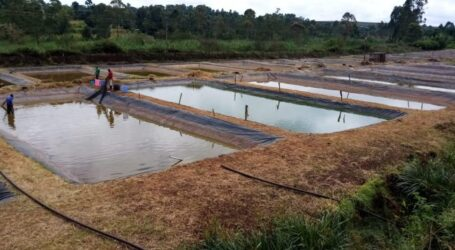 Tips on how to be successful in Tilapia farming.