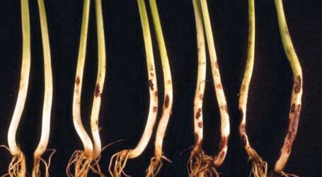How to tackle soil-borne diseases