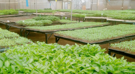 How to use seedling trays for better germination and returns