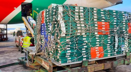 Relief for horticultural sector as KQ flies fresh produce