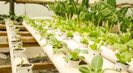 Vertical farming association to tackle food insecurity