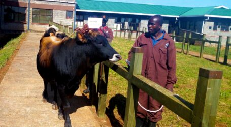 ADC – one stop for quality semen, animal feeds, seeds, and seedlings