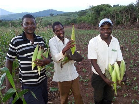 Three Men Farmers holding maize