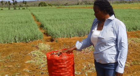 Why Tanzanian onions are preferred