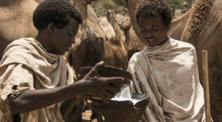 What do you know about camels and camel milk?