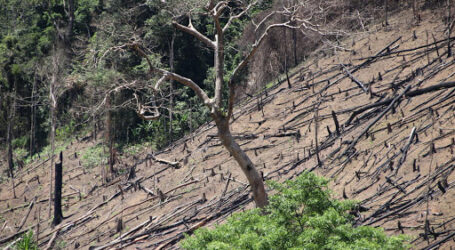 Farmers reap big by restoring degraded forests
