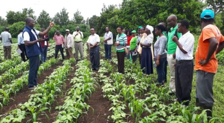 Farmers increase cereal production by 75%