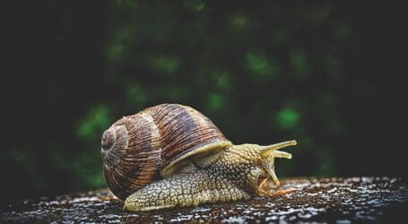 10 ways to deal with slugs and snails on the farm