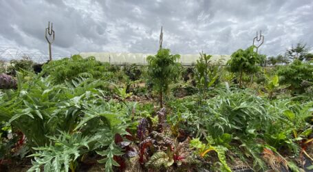 Agroecological farming to boost smallholder food production