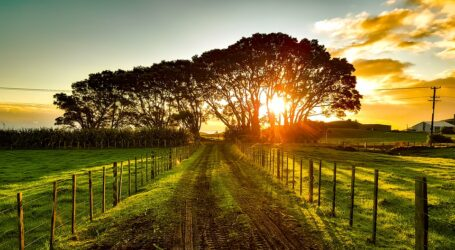 Tips on making the most use of sunlight on your farm
