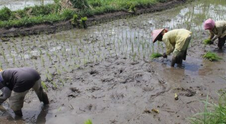 Can agriculture overcome its own water problems?