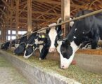 The dairy sector on a 'burning platform'