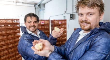 Evonik invests in In Ovo's technology to stop killing of male chicks