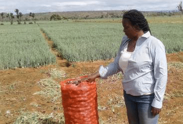 Why Tanzanian Onions are prefered by Kenyans