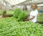 Use seedling trays for better germination and returns