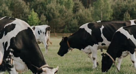 Profits in Commercial Dairy Farming