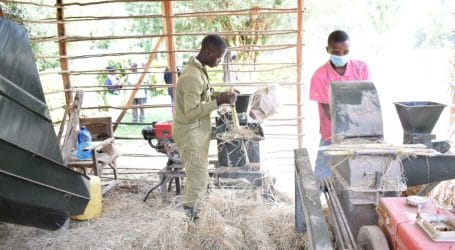 On-farm-feed formulation reduces dairy farmers' costs by 50 per cent