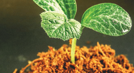 Challenges facing Farmers and Possible Remedies