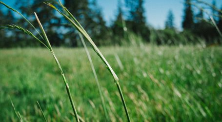Pasture seeds distributed in Narok