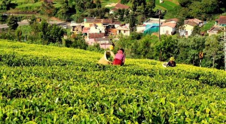 Tea farmers to benefit from Fertilizer subsidy