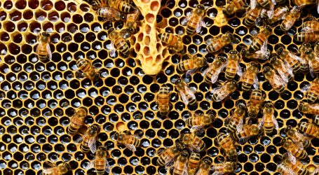 Beehives in Meru and the new dawn farmers
